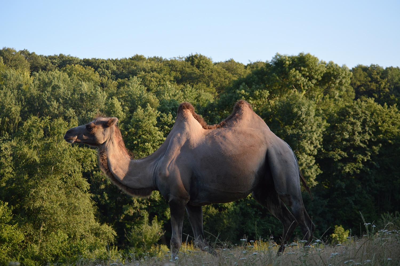 Rencontrer des animaux en semi-liberté en Normandie | Parc animalier d'Écouves