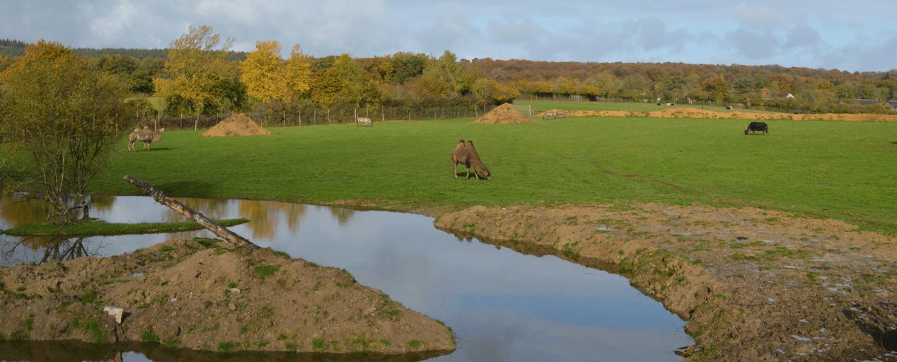 Un hébergement insolite dans un zoo de l'Orne | Parc animalier d'Écouves